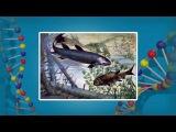 Биология 11 класс. История развития жизни в палеозойскую эру 2
