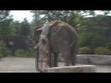 Как залезть на слона