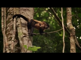 Амазония: Инструкция по выживанию / Amazonia (2013) 720р